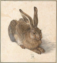 Albrecht Dürer: Young Hare, drawing painted in watercolors, 1502
