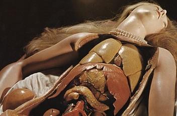 Medici Venus (anatomical wax model), 18th century